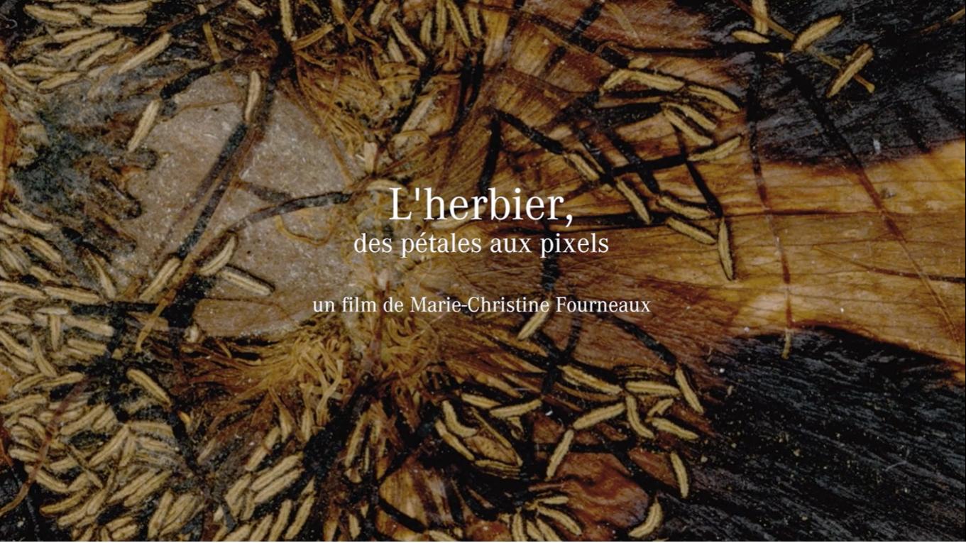 """[FILM DOCUMENTAIRE] de la réalisatrice Marie Christine Fourneaux, """"L'herbier, des pétales aux pixels"""""""